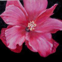 Pink Hibiscus 2 - Avie Nash