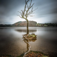 Tethered Tree, Ullswater - Peter Stevens
