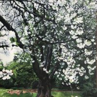 Blossom Tree - Kathy Evershed