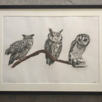 Triplet of Owls - Angus Whiteley