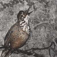 Song Bird Singing - Elaine Kelly