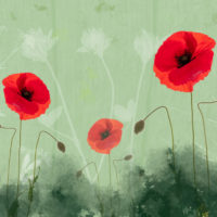 Poppies - Brian Cooke