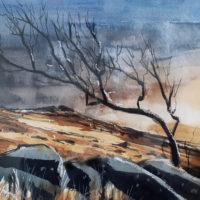 Dartmoor - Mike Rollins